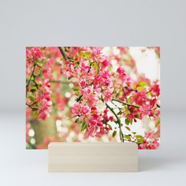 Pink and White Apple Blossoms Mini Art Print