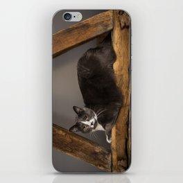 Cat on tree iPhone Skin