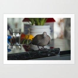Cafe  Pigeon  Art Print