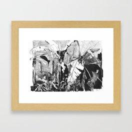 Banana grove Framed Art Print
