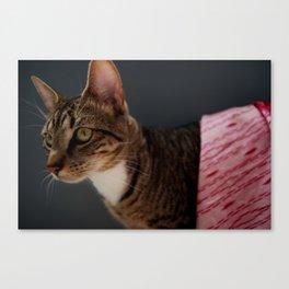 Couture Cat Canvas Print
