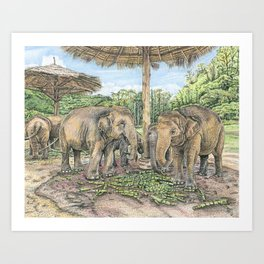 Rescued in Thailand Art Print