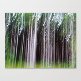 Minnesota Pines Canvas Print