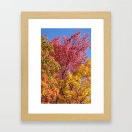Tricolore Framed Art Print