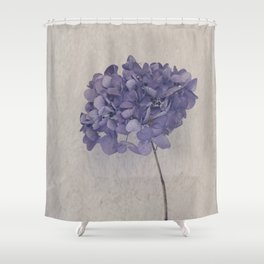Dried Blue Hydrangea II Shower Curtain