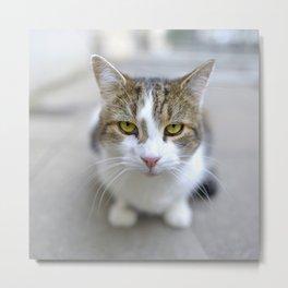 Larry the Downing Street Cat Metal Print