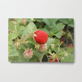 Sweet Berry Metal Print