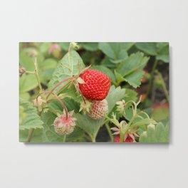 Sweet Berry Metal Print