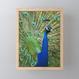 Pavão Framed Mini Art Print