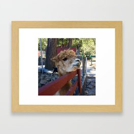 lil animal  Framed Art Print