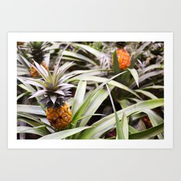 Pineapple Forest Art Print