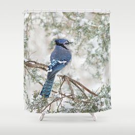 Snow Jay: American Blue Jay Shower Curtain
