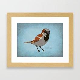 The House Sparrow Framed Art Print