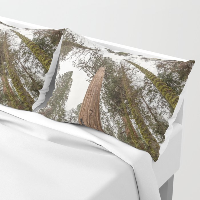 Sequoia Stretch - Nature Photography Pillow Sham