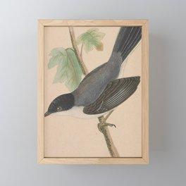 Vintage Print - A History of the Birds of Europe (1859) - Sardinian Warbler Framed Mini Art Print