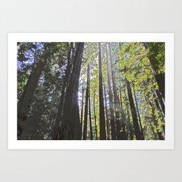 Sunlight through the trees Art Print