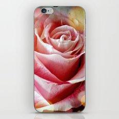Delicate Rose iPhone & iPod Skin