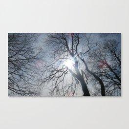 Sunlight through branches Canvas Print