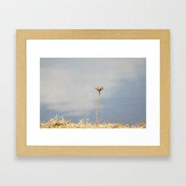 Dragonfly 2 Framed Art Print