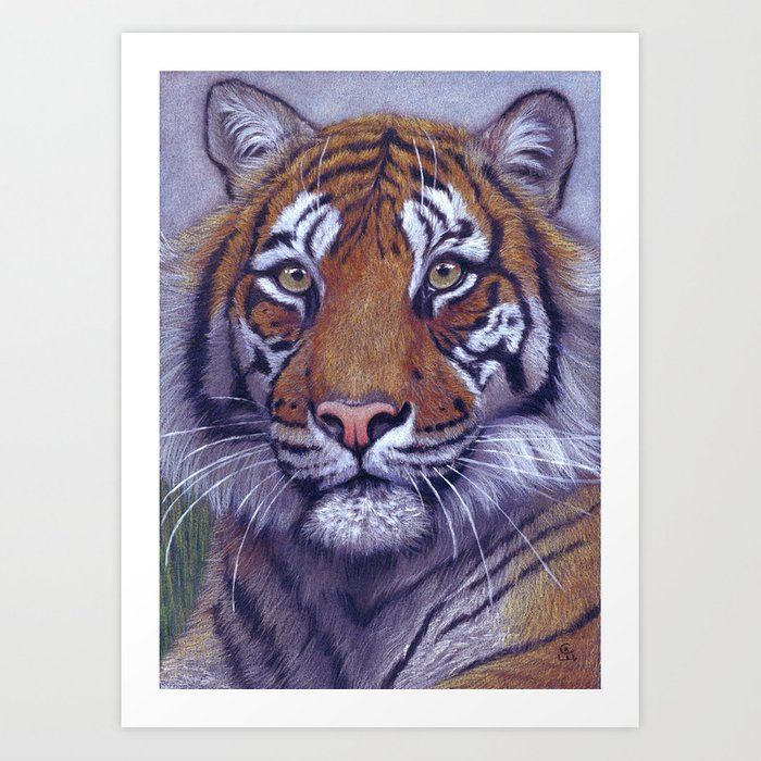 Tiger - portrait CC118 Art Print