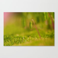 Moss germ, Alone in a green Land Canvas Print
