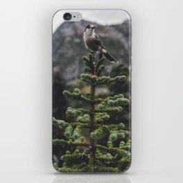 Bird on a Fir Tree iPhone Skin