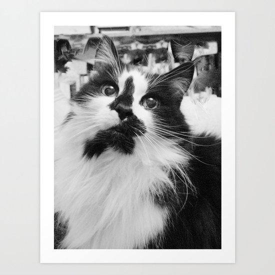 Blott - Kitty Cat I Art Print