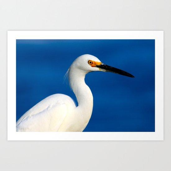 Look into the bird's eye Art Print