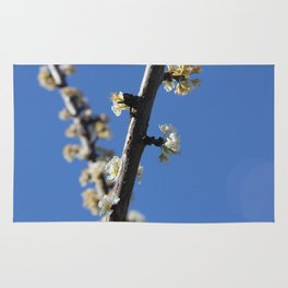 Fruit Blossoms II Rug