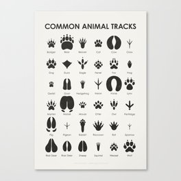 Common Animal Tracks Canvas Print