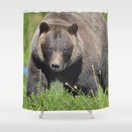 Brown Bear - Alaska Shower Curtain
