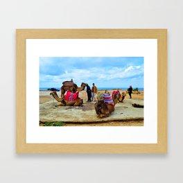 Camels in Morocco Framed Art Print