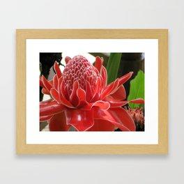 Laos Flower Framed Art Print