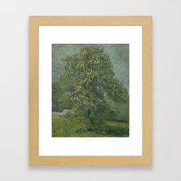 Horse Chestnut Tree in Blossom Framed Art Print