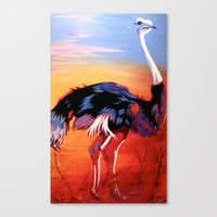 ostrich Canvas Prints featuring Ostrich by Vicki Lynn Rae