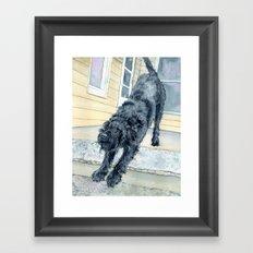 Stretching Black Labradoodle Framed Art Print