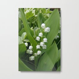 Pure White Lily of the Valley Flower Macro Photograph Metal Print