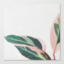 Pink Leaves II Canvas Print