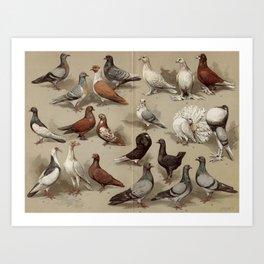 Vintage Pigeon Breeds Chart Art Print