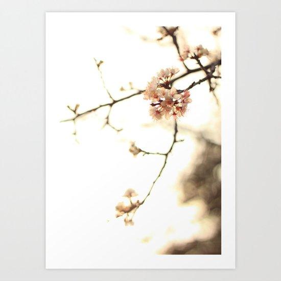pinky petals  Art Print