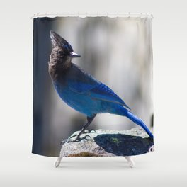 Steller's Jay Shower Curtain