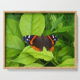 Red Admiral Butterfly Serving Tray