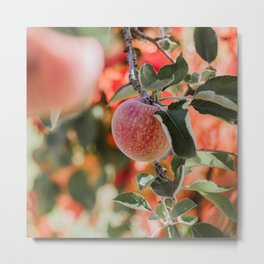 Autumn Apple VII Metal Print