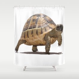 Marching Baby Tortoise Cartoon Vector Isolated Shower Curtain
