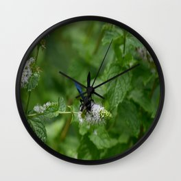 Scolia dubia a.k.a The Blue Winged Wasp Wall Clock