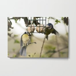 Two Blue Tits Hanging around for food #Bird #Feeder #Tit Metal Print
