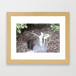 Quack 2 Framed Art Print
