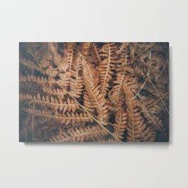 Dry Fern (II) Metal Print