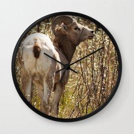 Wild Sheep Photography Print Wall Clock