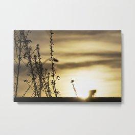 Plant and sun Metal Print